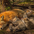 Mother Fox And Her Kits by Steve Dunsford