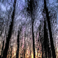 Motion Blurred Trees In A Forest by Vladi Alon
