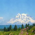 Mount Rainier Watercolor by Tatiana Travelways