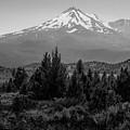 Mount Shasta And Shastina by Frank Wilson