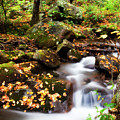 Mountain Creek by Jill Lang