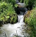 Mountain Stream by Dennis Boyd