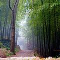 Mountain Trail by James O Thompson