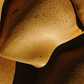 Mushrooms by Marc Bittan