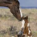Mustang Mare And Foal by Jean-Louis Klein & Marie-Luce Hubert