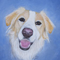 My Blonde Border Collie by Janice M Booth