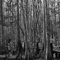 Narrow Path by Keri West