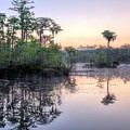 Natural Florida by JC Findley