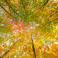 Natures Canopy Of Color by Michael Ver Sprill