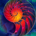 Nautilus Shell Orange Blue Green by Clare Bambers