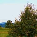 Nc Mountain Apples by Cindy Gacha