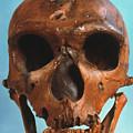 Neanderthal Skull by Granger