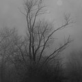 Nebelbild 13 - Fog Image 13 by Mimulux patricia No