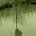 Nesting Box In A Marsh by Robert Hamm
