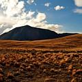 New Zealand Landscape by Tom Nix