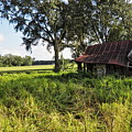 Newberry Fl Farmhouse by Roger Epps