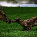 Newborn Elk by Pixabay