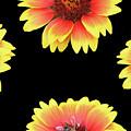 Nice Patterns by Elvira Ladocki