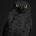 Night Stare by Shane Bechler
