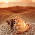 North Shore Seashell by Vince Cavataio - Printscapes
