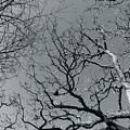 oak by Julian Grant