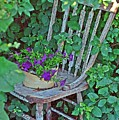 Old Chair New Petunias by Amanda Smith