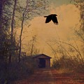 Lone Crow Flies Over The Old Country Road  by Gothicrow Images