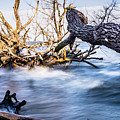 Old Dead Trees On Shores Of Edisto Beach Coast Near Botany Bay P by Alex Grichenko