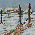 Old Fences by Gail Daley