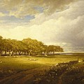 Old Orchard At Newport by William Trost Richards