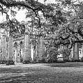 Old Sheldon Church - Tree Canopy by Scott Hansen