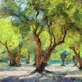 Olive Grove by Dragica Micki Fortuna