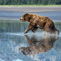 On The Run by Claudia Kuhn