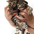 One Week Old Kittens by Yedidya yos mizrachi