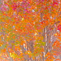 Orange And Red Autumn by Wendy Yee