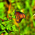 Orange Butterfly Too by Randy Aveille