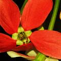 Orange Flower by Nilu Mishra