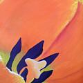 Orange Tulip by Vivian Stearns-Kohler
