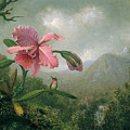 Orchid And Hummingbird Near A Mountain Waterfall by Martin Johnson Heade