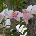 Orchid Bunch by Maria Bonnier-Perez