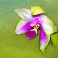 Shy Orchid  by Judi Bagwell