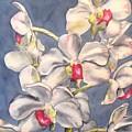 Orchids by Diane Ziemski