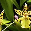 Orchids by Ricky Barnard