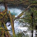 Oregon Stream by Lindy Pollard