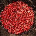 Organize Red Berries by Lizzie  Johnson