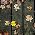 Original Autumn Foliage by Enrico Della Pietra