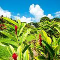 Our Lady Of Fatima Shrine And  White Coral Miracle Church Tropical Garden Wailua Maui Hawaii by Sharon Mau