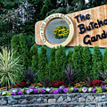 Over 100 Yrs In Bloom, Historic Garden Icon, The Butchart Gardens. by Andrew Kim