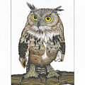 Owl In Pose by Bryan Austerberry