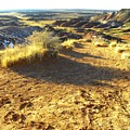 Painted Desert 2 by Patricia Bigelow